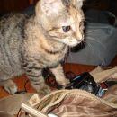 moja moja torbica