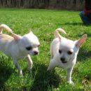 Sassy in Mishko