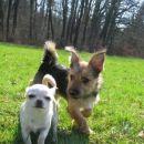Chayka in Sassy
