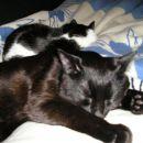 Zvečer utrujeni zaspimo...