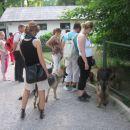 Vsem psom so se tele živali zdele zelo zanimive, čeprav sploh nevem kaj so? :-) Nemška ovč