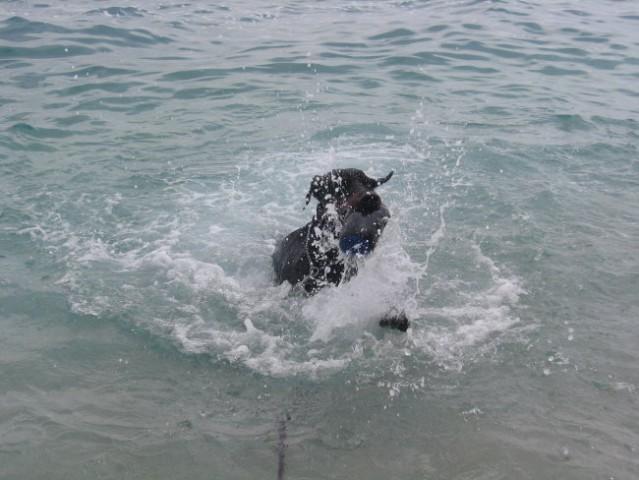 Lepo je bilo čofotati in plavati v morju!
