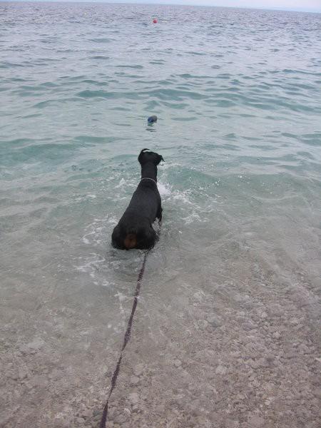 Pa smo bili spet v vodi...
