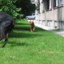Tara je zelo zelo hitra psička!