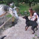Oba s konjem sva bila radovedna in ko sva se hotela povohati sem se ga zelo zelo prestraši