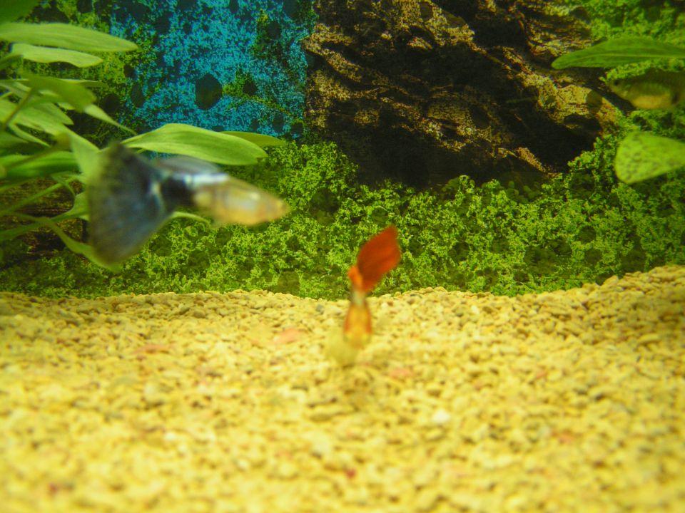 Moj akvarij - foto povečava