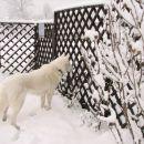 Prvi sneg: mucki so OK,