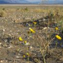 Dolina smrti, tudi življenje se najde tu, če imaš srečo