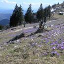 Gojška planina 20. 4. 2008