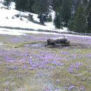 modre cvetlične poljna