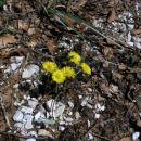 pomlad