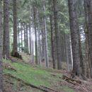 urejen gozd