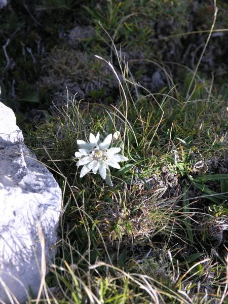 Martuljške gore 19. avgust 2006 - foto