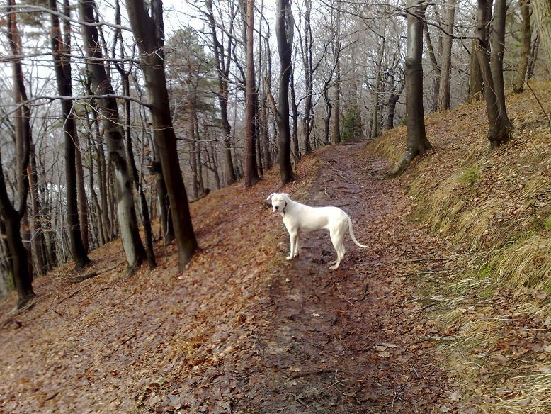 Ula na zimskih sprehodih - foto povečava
