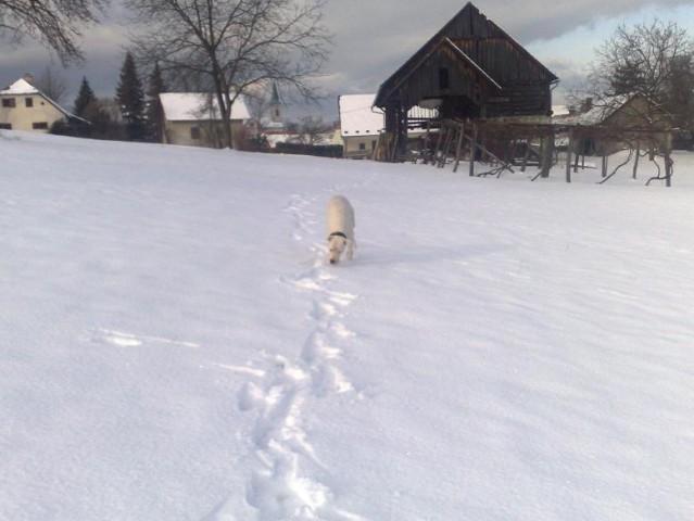 Ula na zimskih sprehodih - foto