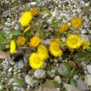 Začetek pomladi