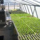 Matični rastlinjak 22.2.2012