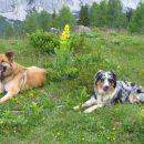 roza, ki je potrebovala dva pasja cuvaja