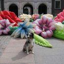 Kopenhaven! Neki umetniki so naredil rozice