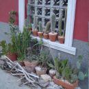 Poletna sipina ob hiši