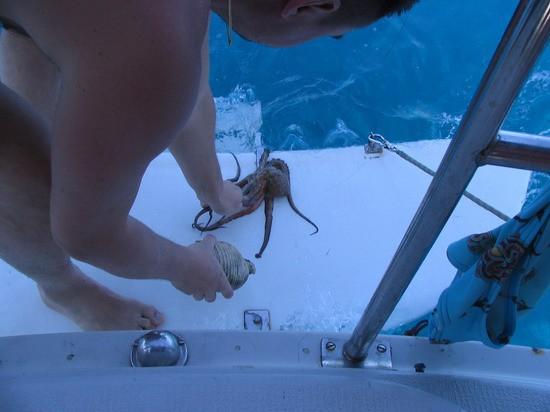 Ker je bila hobotnica premajhna za v lonec smo jo ispustili