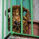 Na balkonih večkrat vidiš tudi take stvari