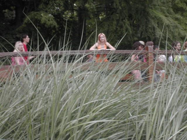 Neki v travi