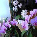 zima/pomlad 2006 - in takole že 7(!!!!) let