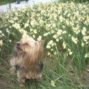 NA obisku pri spomladanskem cvetju v Volčjem potoku - hapčiiiih