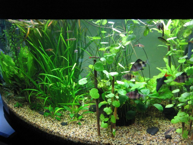 Moj akvarij 150L(24.9.08) - foto