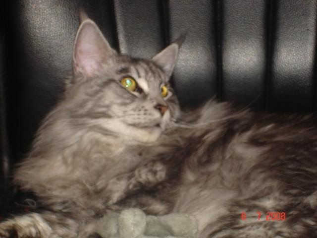 Zoia.moj.album.com - foto
