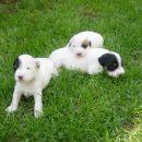 Chaya si ogleduje teritorij, Cookie pa počiva na bratcu