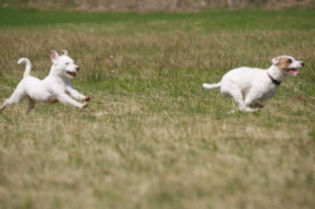 Coursing - foto