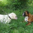 Tyson in Tyson ;)