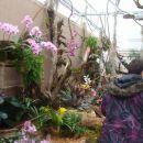 orhideje in metulji