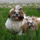 Dvojno razkošje v travi