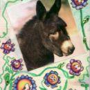 Istrian donkey