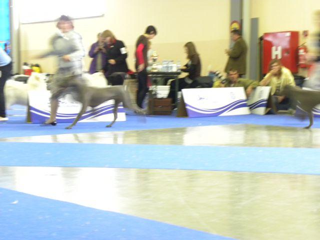 EURODOG SHOW CELJE 2.10.2010 - foto