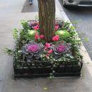 86th street on york aveny, glih pred vrati