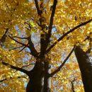 tud u ameriki je jesen, a ne čudno?