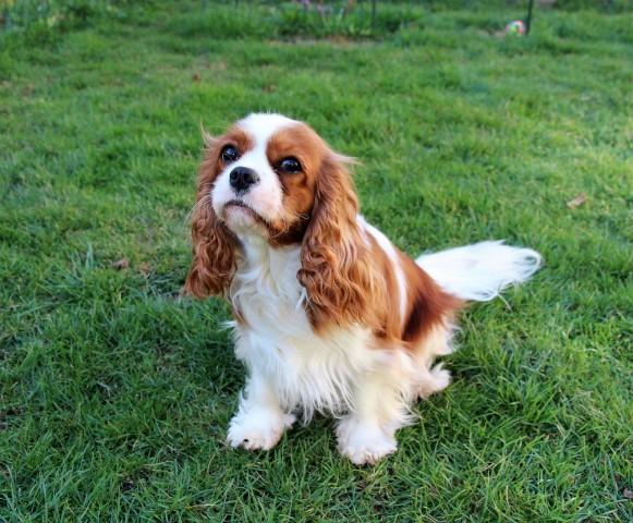 Daisy - foto