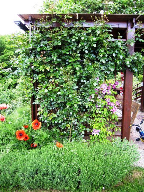 Rožni vrt - foto