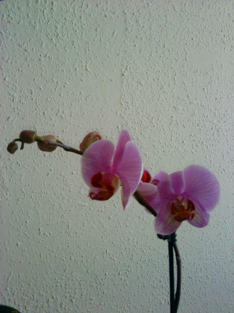 Rože - foto