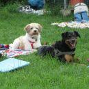 Nutellca in Lana pozorno spremljata igre