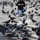 Deček, ki hrani golobe