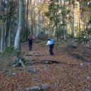 Gozdna pot