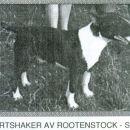 Eartshaker Av Rootenstock