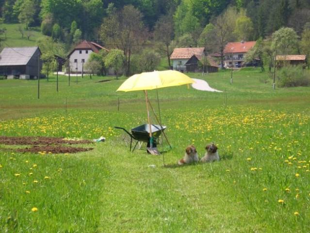 ...kjer pomagava vrtnariti...