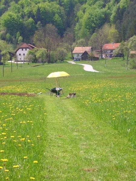 Postojanka sredi travnika...