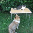 Spravi se dol to je moja miza....
